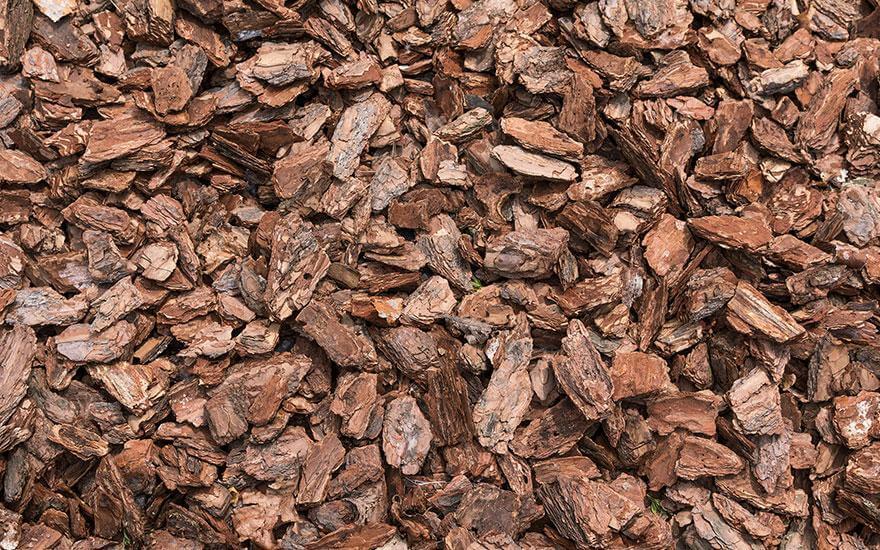 Kora biomasa
